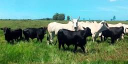 Título do anúncio: Arrendo fazenda sitio para pecuária e plantio horticultura