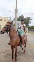 Vendo egua boa de charrete e cela enchertada de cavalo puro 1 categoria