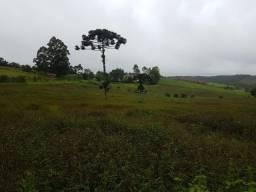 193B/Extraordinária fazenda de 70 ha em ótima localização e bem preparada