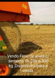 Vendo feno de aveia com sementes de 250 a 300 kg