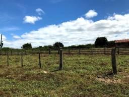 Fazenda sul do Piauí 731 hectares