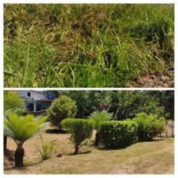 Limpeza de terreno,gramado, poda de árvores em geral.
