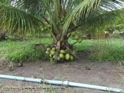 Título do anúncio: Mudas de coco anão