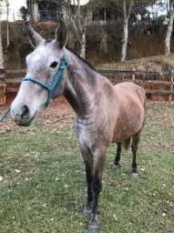Égua rosilha 4 anos
