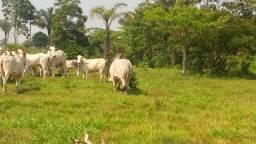 Colônia 16 hectares 068999408167