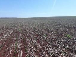Fazenda arrendamento Xingu Mato Grosso g 100