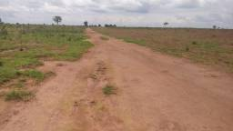 Fazenda Dupla Aptidão - Lavoura - Gado