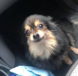 Villa Bullgaço Pet Hotel para Cães e Taxi Dog