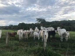 Fazenda à venda com 42,5 alqueires em Caldas Novas, Goiás