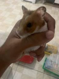Filhotes de hamster com gaiola