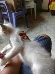 Doa-se essa linda gatinha