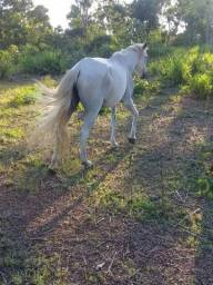 Égua Branca
