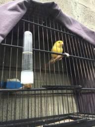 Aves a Venda Santa Catarina