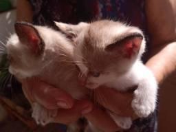 Doação de Gatinhos (Filhotes)