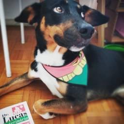 Cachorro SRD para adoção