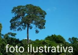 Fazenda com 9.300 hectares em Atalaia do Norte no Amazonas, ler descrição do anuncio