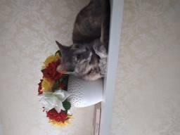 Doação 2 gatinhos lindos