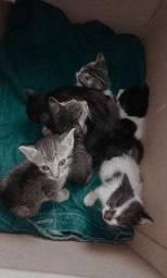 Doase gatos