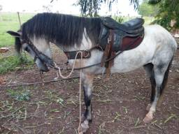 Vende se cavalo Mangalaga Machador