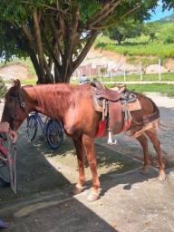Cavalo e egua chamo no zap *