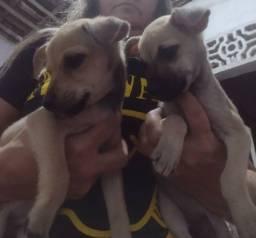 Título do anúncio: Doação de filhotes de cachorros