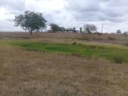 Fazenda Viração - Santo Estevão/BA