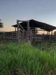 Linda Fazenda na Paulo fonteles à 50km de Parauapebas PA, de 20 alqueires