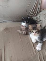 Doação 3 gatinhos