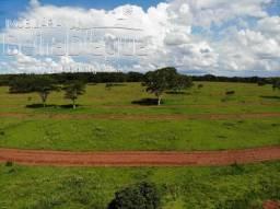 Fazenda 25 Alqueirao Dupla Aptidao Plana Pecuaria Arrenda para usina de Cana