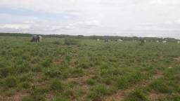 Fazenda com 570 hectares na região de monte alegre