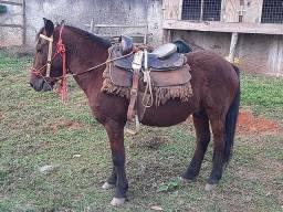 Vendo cavalo 3 mil ou pego outro no valor