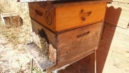 Título do anúncio: caixa de abelhas apis europa/africanizada produzindo