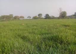Fazenda em Paraiso do Tocantins - TO