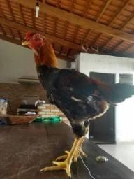 Vende.se frangos