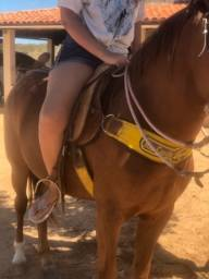 Cavalo cavalgar