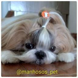 Acessório Penteados Pets