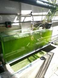 Aquário de 140x30x50 (210 litros)
