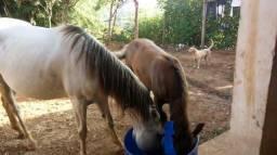 Égua e potrinho