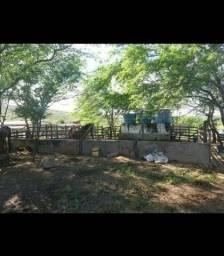 Fazenda com 150 hectares em bom Jesus com o rio Jundiaí poço etc