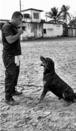 Locação de Cãe de Guarda