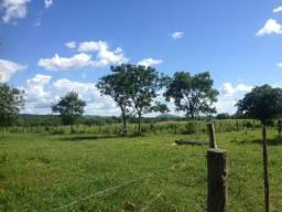 Fazenda 254 hectares em porto de fora, região de sto antônio de Leverger