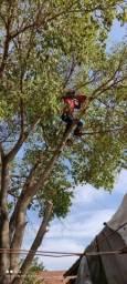 Título do anúncio: Podar e corte de árvores