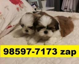 Canil Lindos Filhotes Cães BH Shihtzu Poodle Beagle Lhasa Yorkshire Maltês Beagle