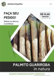 Palmito Guariroba