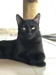 Doação gatinho preto do olho verde