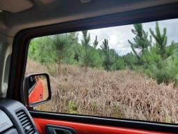 Vende se terreno com reflorestamento