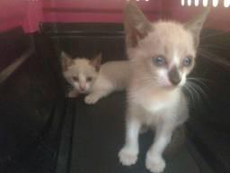Gatos filhotes machos  para doação