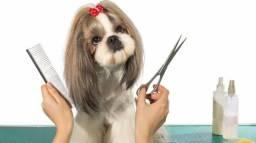 Tosadora de cães p/ petshop