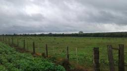 Fazenda 539ha estrada do morocó - Santa Rita do Trivelato Mato Grosso