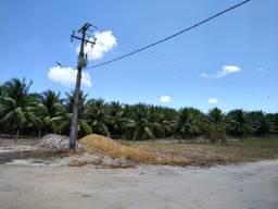 Fazenda de coqueiros produzindo com 6 mil coqueiros, 3 poços, irrigado